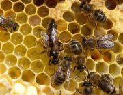 volle honigwaben lagern