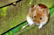 Flugloch vor Mäusen sichern | Quelle: Peter Freitag / pixelio.de