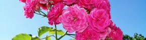 Garten als Bienenweide