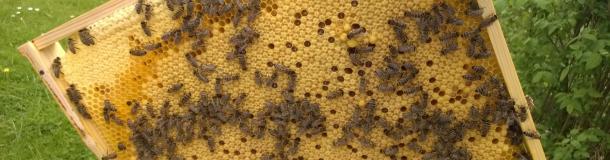 Bienenvölker kaufen