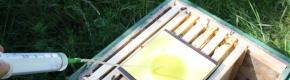 Schwammtuchmethode mit Ameisensäure
